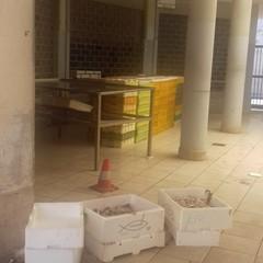 Conferimento illecito di rifiuti, controlli e multe salate a Giovinazzo