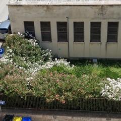 Zanzare, blatte e topi, aumentano le segnalazioni dall'ex scuola Pansini
