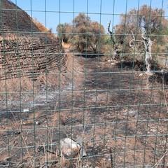 PVA, Discarica Giovinazzo: «Si continua a scherzare col fuoco»