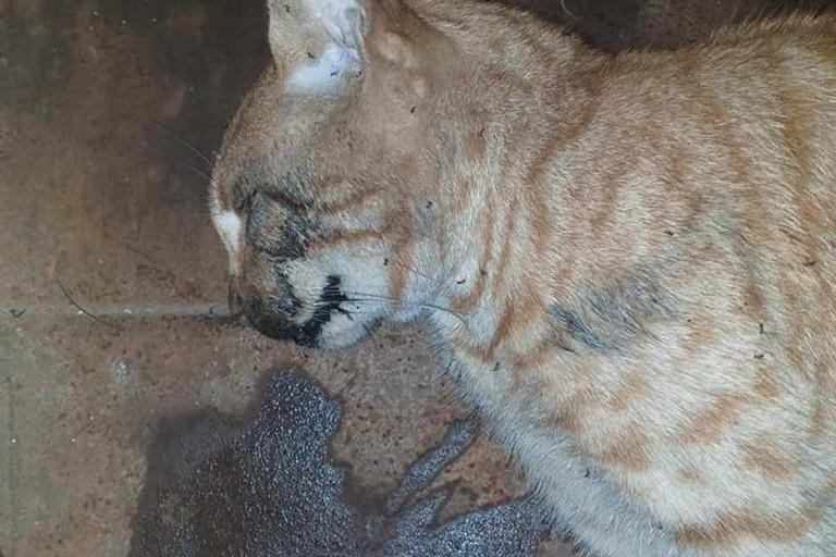 La povera gatta uccisa a Giovinazzo