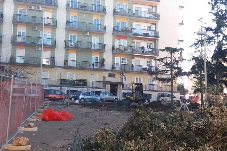 Alberi abbattuti in piazza Stallone. <span>Foto Gianluca Battista</span>