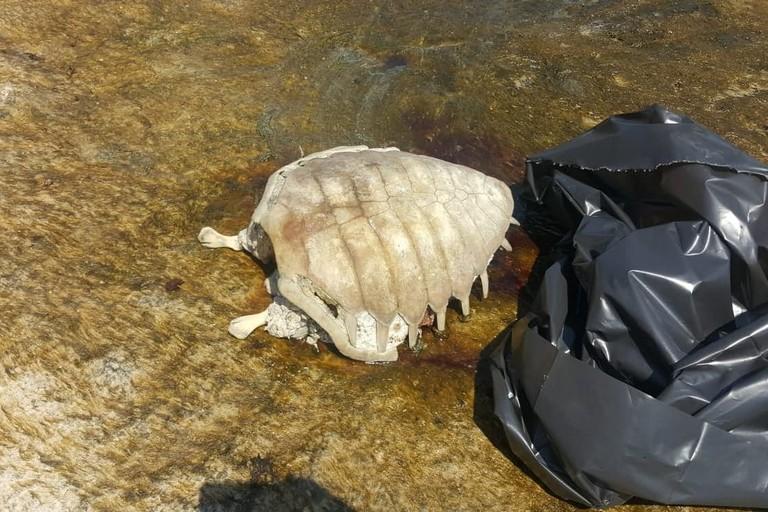 La tartaruga morta al lido Dieci Venti