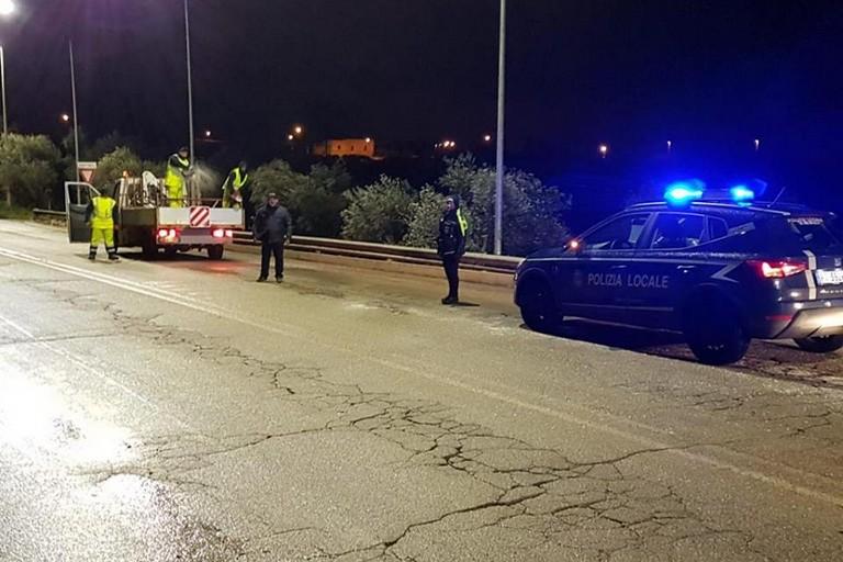 Polizia Locale e SerMolfetta in azione