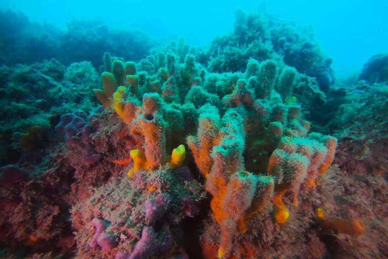 La barriera corallina fra Giovinazzo e Molfetta