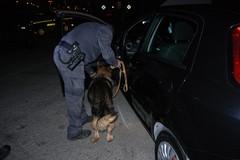 Droga, blitz della Guardia di Finanza: con i cani nella Villa