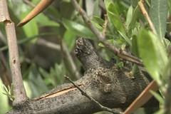 Maltempo, nelle campagne di Giovinazzo è strage di ulivi. LE FOTO