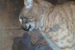 Fine atroce per una gatta, trovata morta in via Bari. La foto shock