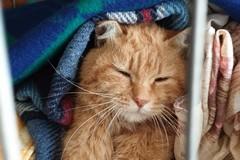 Risonanza effettuata dopo la gara di solidarietà: Giovinazzo in ansia per gatto Lucio