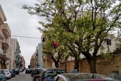 A Giovinazzo ci sono gli alberi dell'immondizia. Depalma infuriato