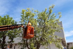 Ripulito dai rifiuti l'albero in via Molino. Verbale in arrivo