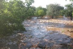 Puglia martoriata dal maltempo, la CIA chiede attenzione al Governo