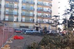 Velostazione, in piazza Stallone iniziato l'abbattimento degli alberi: infuria la polemica
