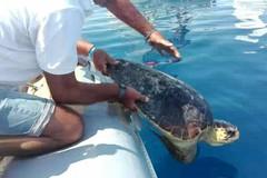 Ecco Pasolina: la tartaruga liberata dal Centro Velico