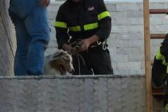 Cane precipita per 7 metri, salvato dai Vigili del Fuoco