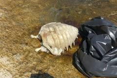 Tartaruga morta portata a riva al lido Dieci Venti