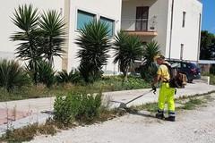 Interventi di pulizia nella D1.1 di Giovinazzo
