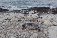 Ecatombe di delfini e tartarughe in Adriatico