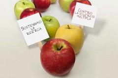 Le mele AISM nelle piazze di Giovinazzo