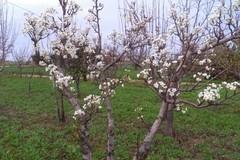 Coldiretti Puglia: «Quarto autunno più caldo dal 1800»