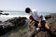 Alga tossica: confermato bollino rosso per Giovinazzo