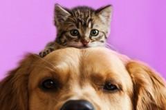 Covid e animali domestici: nessun rischio per l'uomo