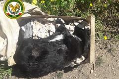 Cani morti abbandonati tra i rifiuti a Torre Bonvino