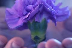 """""""Fiore di maggio"""", così la Caritas diocesana sostiene le imprese florovivaistiche"""