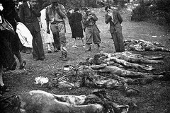 Giovinazzo non dimentica i martiri delle Foibe