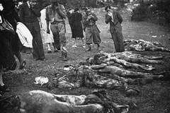 Giovinazzo ricorderà i martiri delle foibe