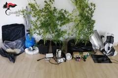 In quarantena coltiva marijuana sul terrazzo, denunciato un 37enne