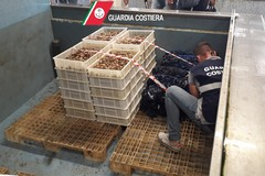 Giro di vite sull'igiene: 455 chili di cozze e ostriche sotto sequestro