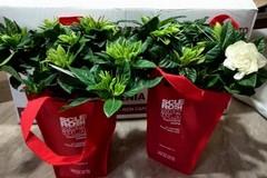 Lotta alla Sclerosi Multipla: oggi e domani le gardenie AISM a Giovinazzo