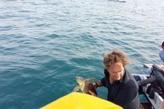 Liberata in mare la tartaruga salvata il 27 agosto scorso