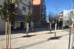 Piantumati 41 nuovi alberi a Giovinazzo