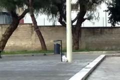 Ancora sacchetti di rifiuti abbandonati sotto il cavalcaferrovia