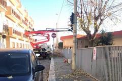 """Nessun espianto di alberi alla """"Papa Giovanni XXIII"""""""
