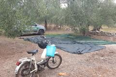 Preleva 2 quintali di olive da un fondo. Colto sul fatto un 70enne