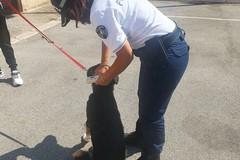 Deiezioni canine e microchip, controlli serrati della Polizia Locale