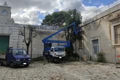Salvati alberi secolari nell'IVE. Soddisfatto Nicola De Matteo
