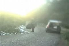 Abbandono selvaggio di rifiuti a Giovinazzo