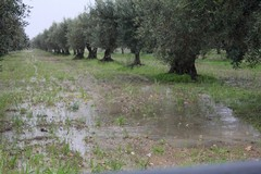 Maltempo, l'allarme di Coldiretti Puglia