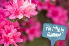 Festa della Mamma, prezzi capestro al mercato nero di fiori e piante. Coldiretti denuncia