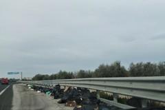 Statale 16 bis, rifiuti nelle piazzole di sosta in territorio giovinazzese: chi pulisce?