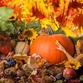 Alimenti d'autunno: un pieno di energia per prepararci all'inverno