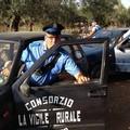 Sventato un furto di olive dalla Vigile Rurale, ladri in fuga