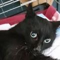 Luce, la gattina cieca bisognosa di cure