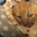 È morto Lucio, il gatto che ha commosso Giovinazzo