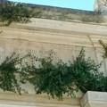 Cimitero Giovinazzo, il terzo blocco infestato da rampicanti ed erbacce
