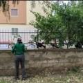 """Elogio ad Elena, la  """"mamma """" di tanti gatti di Giovinazzo"""