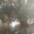 Maltempo: ancora possibili forti temporali su Giovinazzo